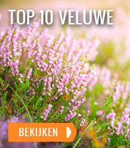 Top 10 Veluwe
