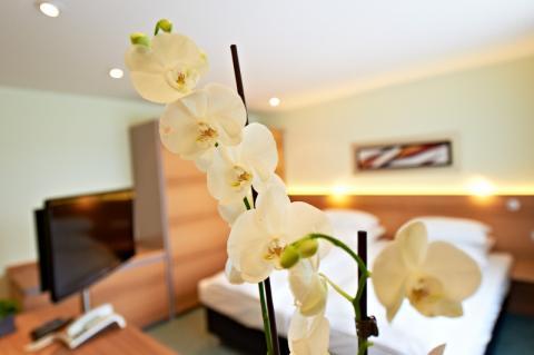 Hotel Hirsch Hotel