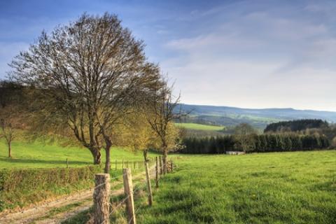 Belgischen Ardennen