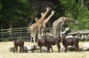 Zoo Amersfoort